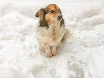 Cane sulla neve Immagini Stock