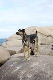 Cane sulla pietra Fotografia Stock Libera da Diritti