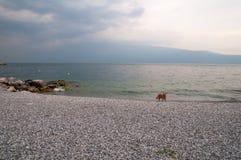 Cane sulla polizia del lago Immagine Stock