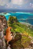 Cane sulla roccia, Maupiti fotografia stock