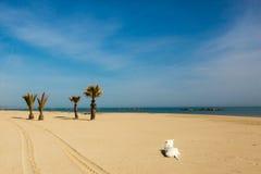 Cane sulla sabbia della spiaggia Immagini Stock Libere da Diritti