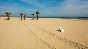 Cane sulla sabbia della spiaggia Fotografia Stock Libera da Diritti