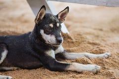 Cane sulla spiaggia Immagine Stock