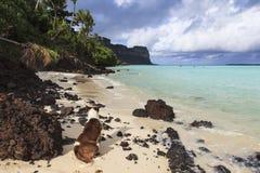 Cane sulla spiaggia Fotografia Stock