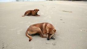Cane sulla spiaggia della Tailandia Fotografia Stock