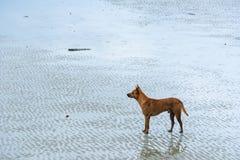 Cane sulla spiaggia thailand immagini stock