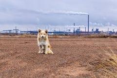 Cane sulla strada Fotografie Stock Libere da Diritti