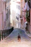 Cane sulla via Immagini Stock