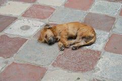 Cane sulle mattonelle immagini stock