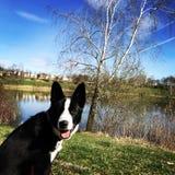Cane sulle nuvole del lago fotografia stock