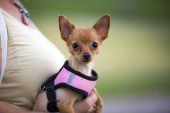 Cane sveglio, animale domestico fotografia stock libera da diritti
