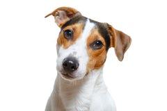 Cane sveglio che esamina macchina fotografica Immagine Stock Libera da Diritti