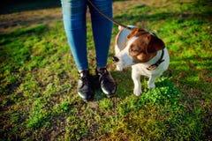 Cane sveglio che gioca vicino alle gambe della donna Immagine Stock