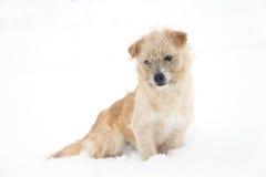 Cane sveglio che si siede nella neve Immagini Stock Libere da Diritti