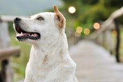Cane sveglio che si siede sul modo di bambù della passeggiata e che cerca in natura Immagini Stock