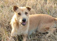 Cane sveglio che si trova sull'erba e sullo sguardo alla macchina fotografica fotografia stock libera da diritti