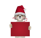 Cane sveglio con la caramella di natale che tiene una carta con spazio per testo Fotografia Stock Libera da Diritti
