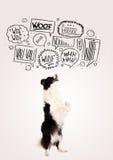 Cane sveglio con le bolle di scortecciamento Fotografie Stock Libere da Diritti