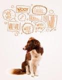 Cane sveglio con le bolle di scortecciamento Fotografia Stock Libera da Diritti