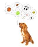 Cane sveglio con le palle nelle bolle di pensiero Fotografie Stock