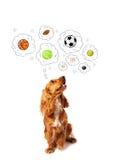 Cane sveglio con le palle nelle bolle di pensiero Immagine Stock