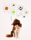 Cane sveglio con le palle nelle bolle di pensiero Fotografia Stock Libera da Diritti