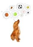 Cane sveglio con le palle nelle bolle di pensiero Fotografia Stock