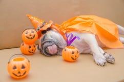 Cane sveglio del carlino con il costume di resto felice di sonno di giorno di Halloween sulla s Immagini Stock Libere da Diritti