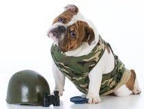 cane sveglio di combattimento immagini stock libere da diritti