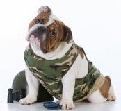 cane sveglio di combattimento fotografie stock