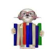 Cane sveglio di shitzu che tiene una grande pila di libri -- su bianco Immagini Stock Libere da Diritti