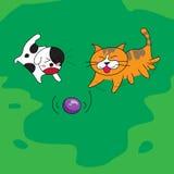 Cane sveglio e gatto che giocano con la palla sul campo Fotografia Stock Libera da Diritti