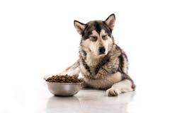 Cane sveglio ed il suo alimento asciutto favorito su un fondo bianco immagine stock