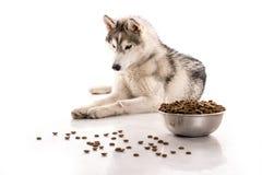 Cane sveglio ed il suo alimento asciutto favorito su un fondo bianco Fotografie Stock