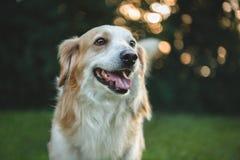 Cane sveglio felice Fotografia Stock Libera da Diritti