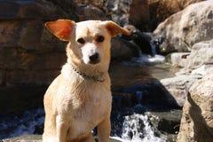 Cane sveglio nella natura Fotografia Stock