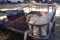 Cane sveglio su un motociclo del sidecar fotografie stock libere da diritti