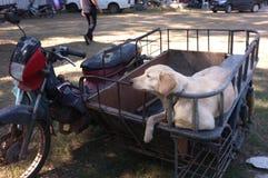Cane sveglio su un motociclo del sidecar fotografia stock