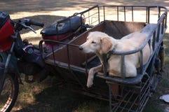 Cane sveglio su un motociclo del sidecar immagini stock