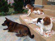 cane sveglio tre fotografia stock