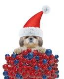 Cane sveglio in un cappello di Santa Claus con il fondo delle palle di natale Fotografia Stock Libera da Diritti