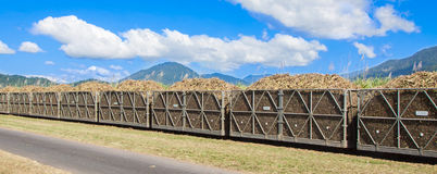 Cane train loaded with sugar cane Stock Image