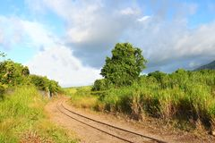 Cane train track - St Kitts. Railroad tracks run through a sugar cane field on Saint Kitts Royalty Free Stock Images