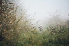 Cane triste in nebbia di autunno fotografia stock libera da diritti
