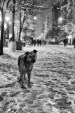 Cane triste nell'inverno Fotografie Stock Libere da Diritti