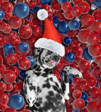 Cane in un cappello di Santa Claus che mette sulle palle di un natale Immagine Stock Libera da Diritti