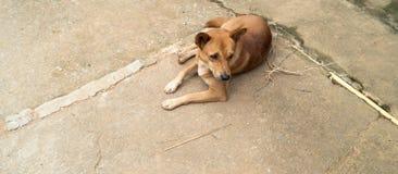 Cane in un paesino di montagna di Akha in Tailandia Fotografia Stock
