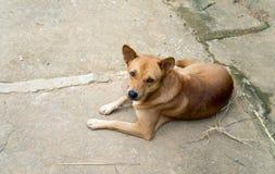 Cane in un paesino di montagna di Akha in Tailandia Fotografie Stock Libere da Diritti