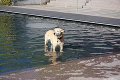 Cane in una fontana Fotografie Stock