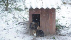 Cane in una fossa di scolo con il gatto che si siede vicino nell'inverno video d archivio